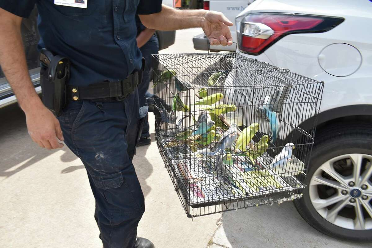 Officers rescued 95 animals including 15 potbelly pigs, 75 parakeets, two guinea pigs and three Chihuahuas.