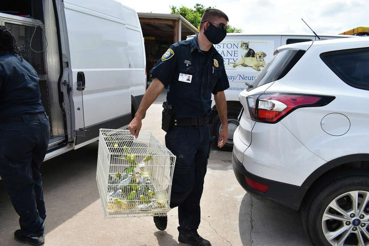 Officers with BARC, a task force partner, seized nearly 100 animals after a self-proclaimed flea market breeder surrendered the animals to police in April.