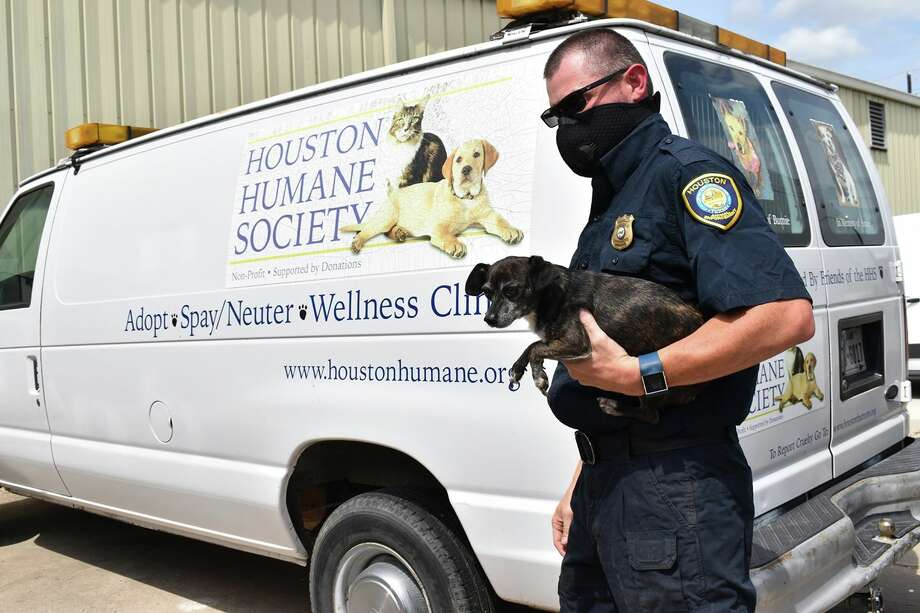 Officers with BARC, a task force partner, seized nearly 100 animals after a self-proclaimed flea market breeder surrendered the animals to police in April. Photo: Houston Humane Society