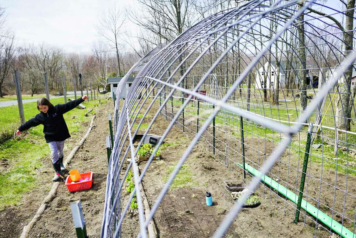 Stella Marcy, 10, balances herself as she walks across tree limbs from their property used as a boarder around an area of the garden on Thursday, April 23, 2020, in Poestenkill, N.Y. The wire cage seen on the right in the photo is for vertical growing of vegetables. (Paul Buckowski/Times Union)