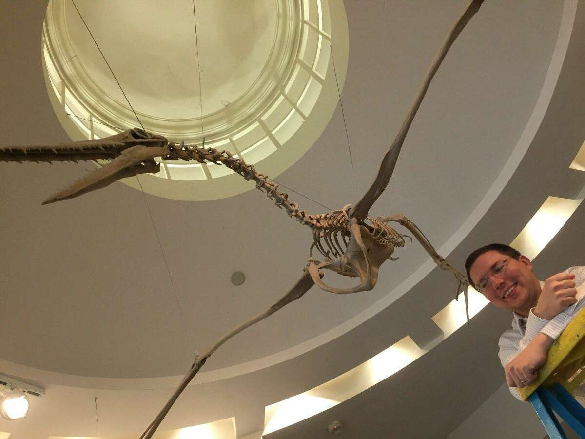 Dr. Daniel Ksepka, curator of science at Bruce Museum, and a giant bird that soared in prehistoric skies .