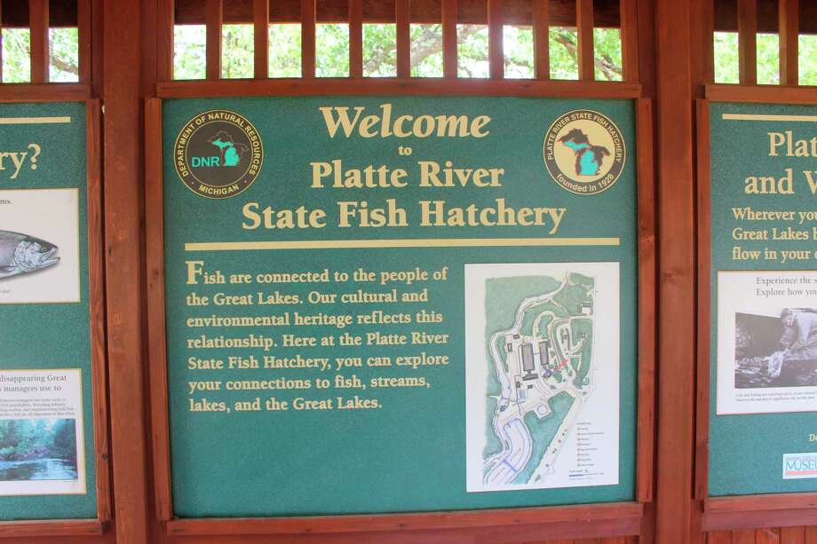 The Platte River State Fish Hatcheryoperations have not been hindered by the social distancing order outside of the loss of a small egg take for walleye. (File Photo)