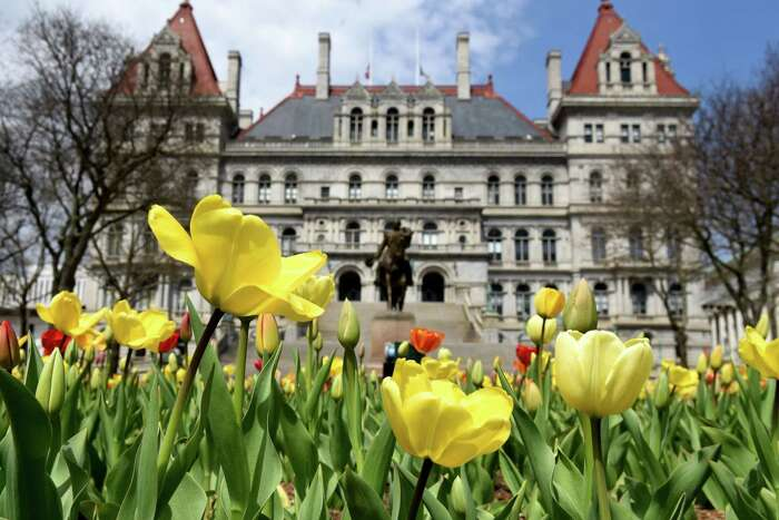 Tulips bloom in East Capitol Park on Wednesday, April 29, 2020, in Albany, N.Y. This year's AlbanyTulip Festival has been canceled because of coronavirus. (Will Waldron/Times Union)