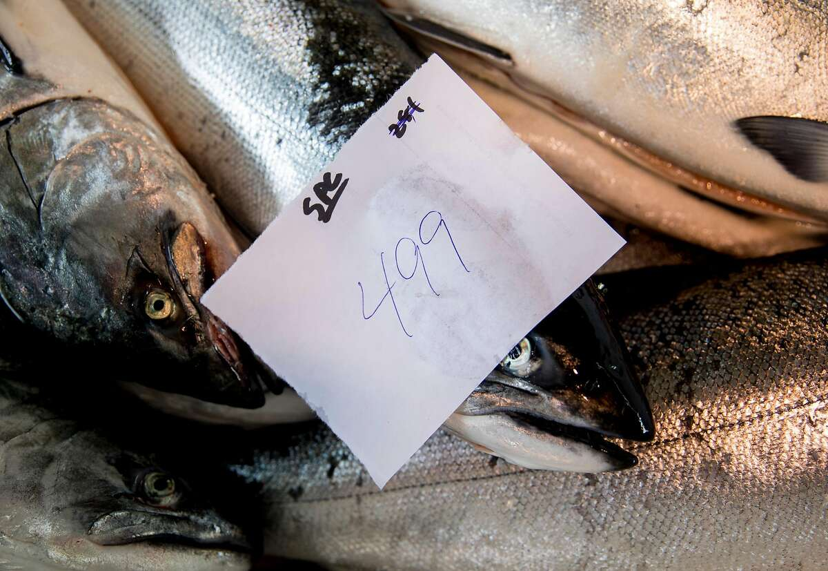 The weight of a haul of salmon from the Pacific Sea fishing boat is written on a piece of paper and stuck to a fish while at the unloading dock of Pier 45 at Fisherman's Wharf in San Francisco, Calif. Friday, June 21, 2019.
