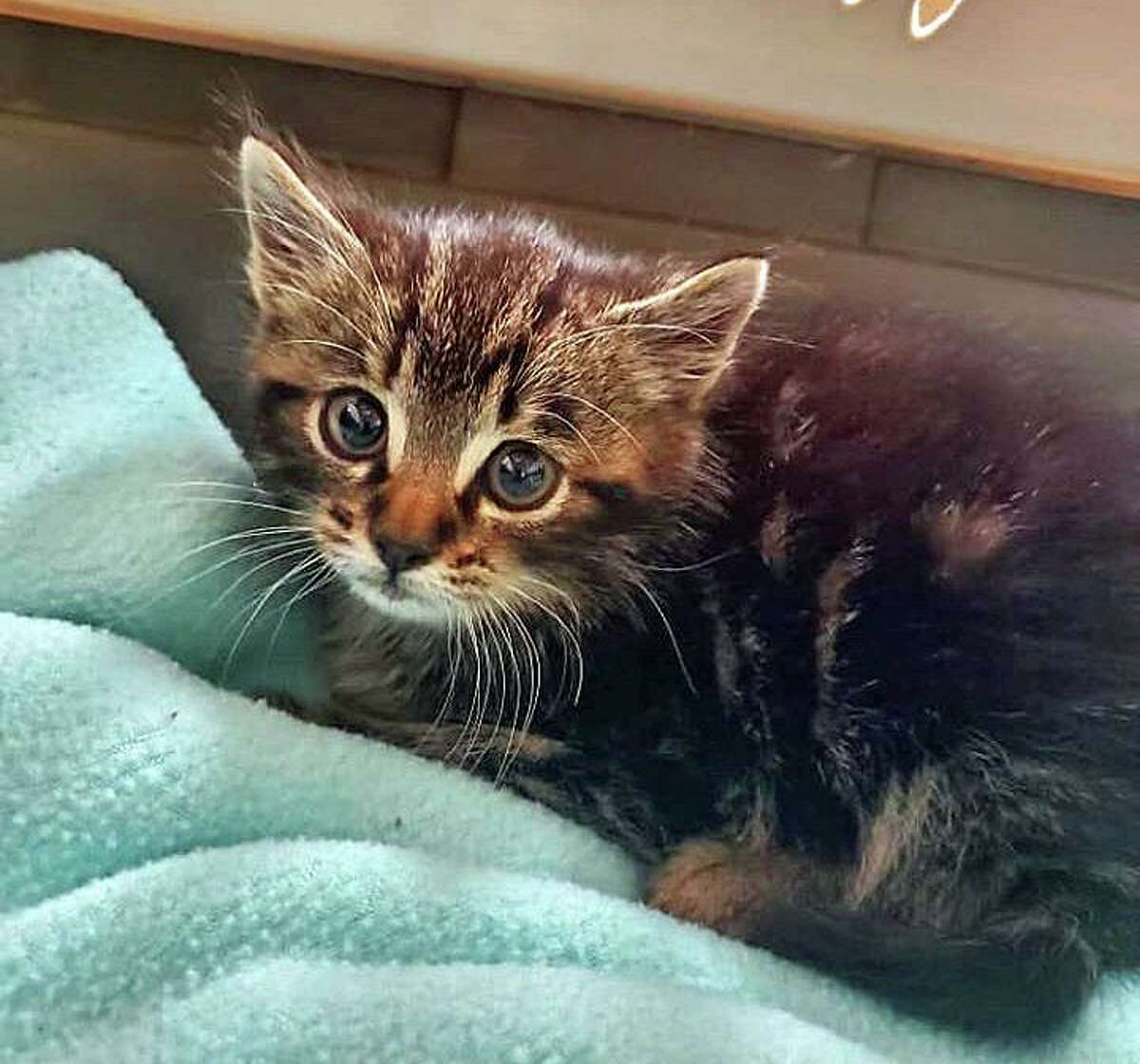 The surviving kitten - a male - was taken to the animal control facility in good health before being transferred to a local animal rescue. The kitten was placed in a new home the same day, police said.