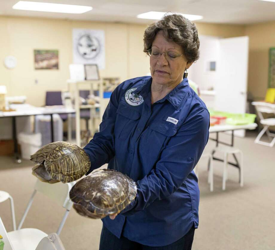 Cathie H. Coudert, the education coordinator for the Friends of Texas Wildlife in Magnolia shows the the difference between two turtle shells in the education center, Tuesday, Jan. 28, 2020. The facility had planned to host an open house on March 21, 2020, but had to cancel it due to COVID-19. Photo: Gustavo Huerta, Houston Chronicle / Staff Photographer / Houston Chronicle