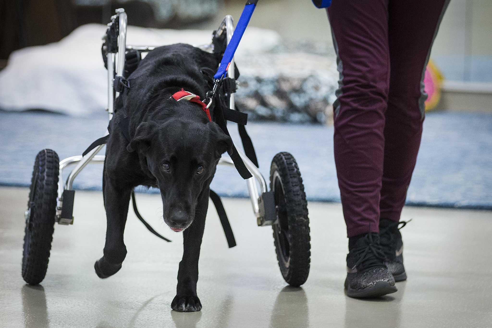 Personalised Paw Print Ladies Mini Reporter Bag Ideal For Dog Training /& Walking