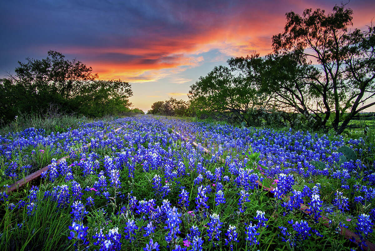 Texas State ParksThank your lucky stars, you're in Texas. There are 89 state parks throughout the state boasting some of the most beautiful wildflower displays.Stop by and spot the blooms at Pedernales Falls State Park, Lyndon B. Johnson State Park and Historic Site, Government Canyon State Natural Area and McKinney Falls State Park.