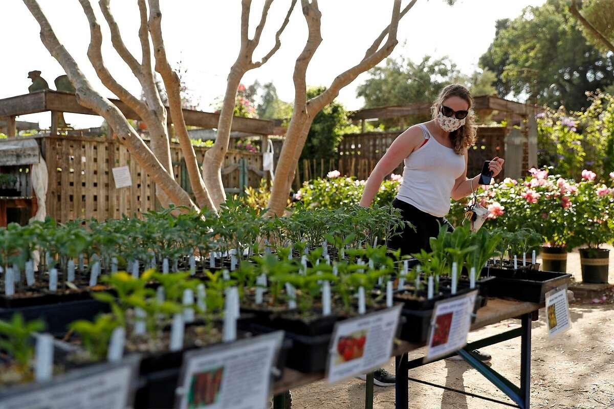 Customer Haley Bisgaard shops at Cottage Gardens of Petaluma in Petaluma, Calif., on Thursday, April 30, 2020.
