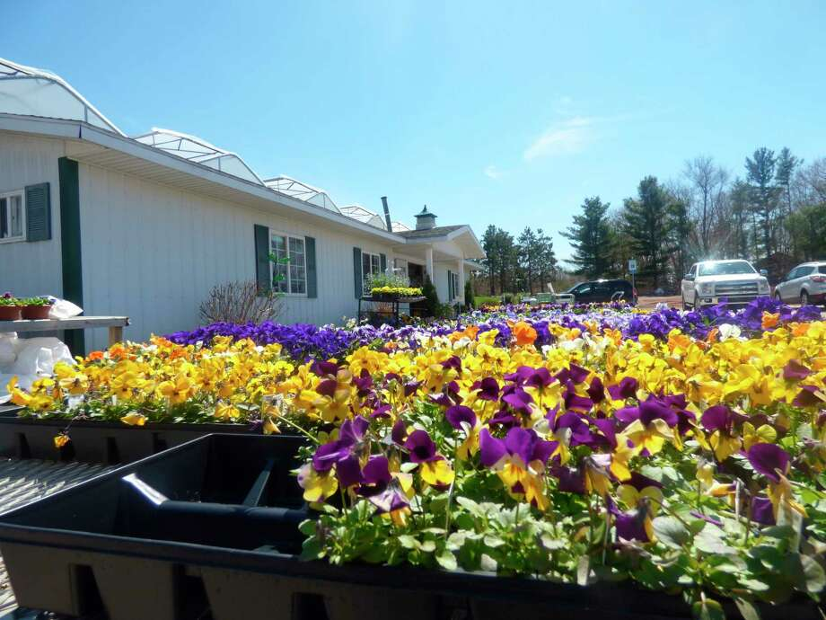 Weesies Brothers Garden Center and Landscaping and other gardening stores in Manistee County have opened for the season. (Scott Fraley/News Advocate)
