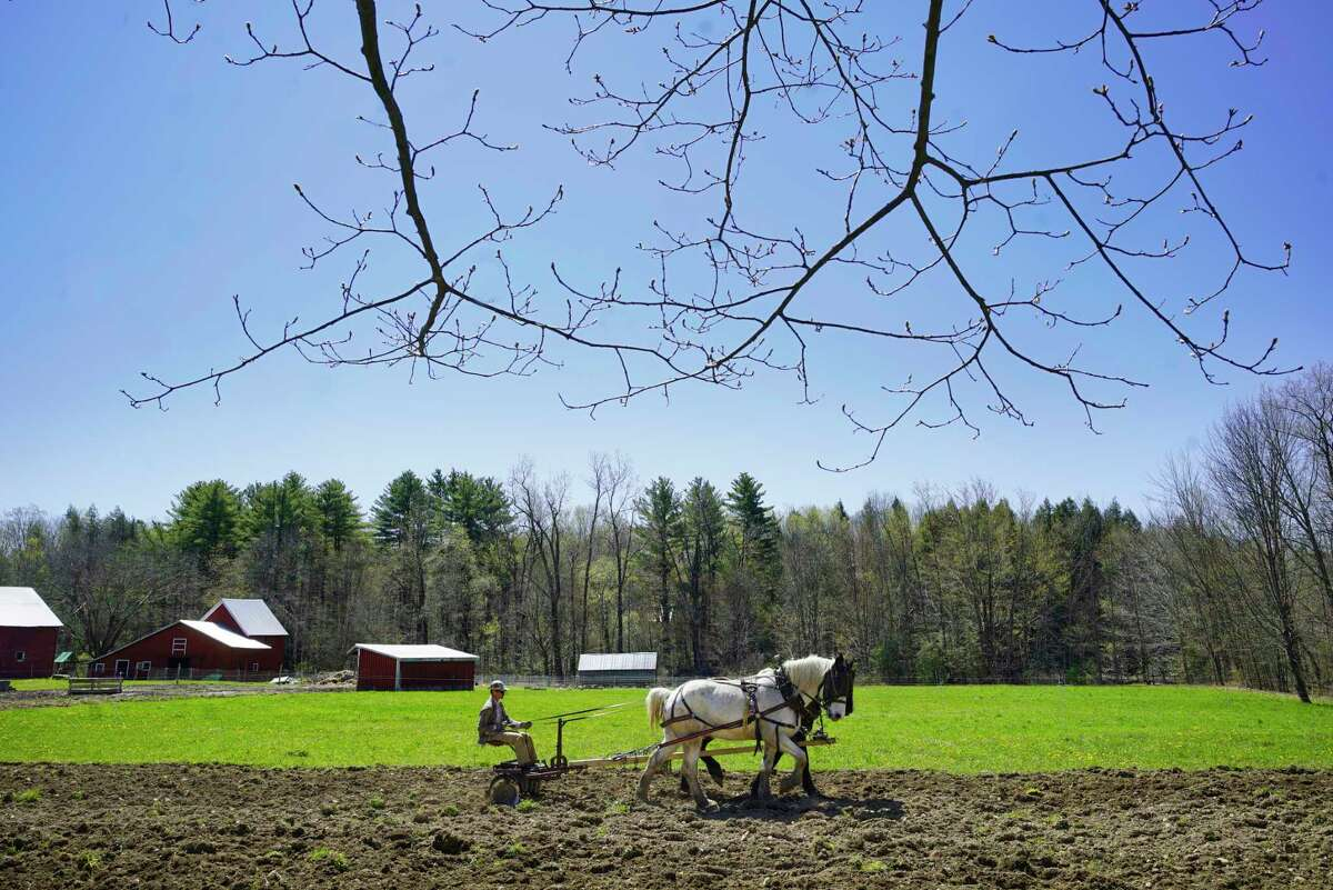Tim Biello uses his two Percheron draft horses, Bear and Duke, as he discs a field to prepare for planting at Featherbed Lane Farm on Sunday, May 3, 2020, in Ballston Spa, N.Y. This is a new field Biello is prepping and he plans to plant strawberries, chard, and spinach. (Paul Buckowski/Times Union)