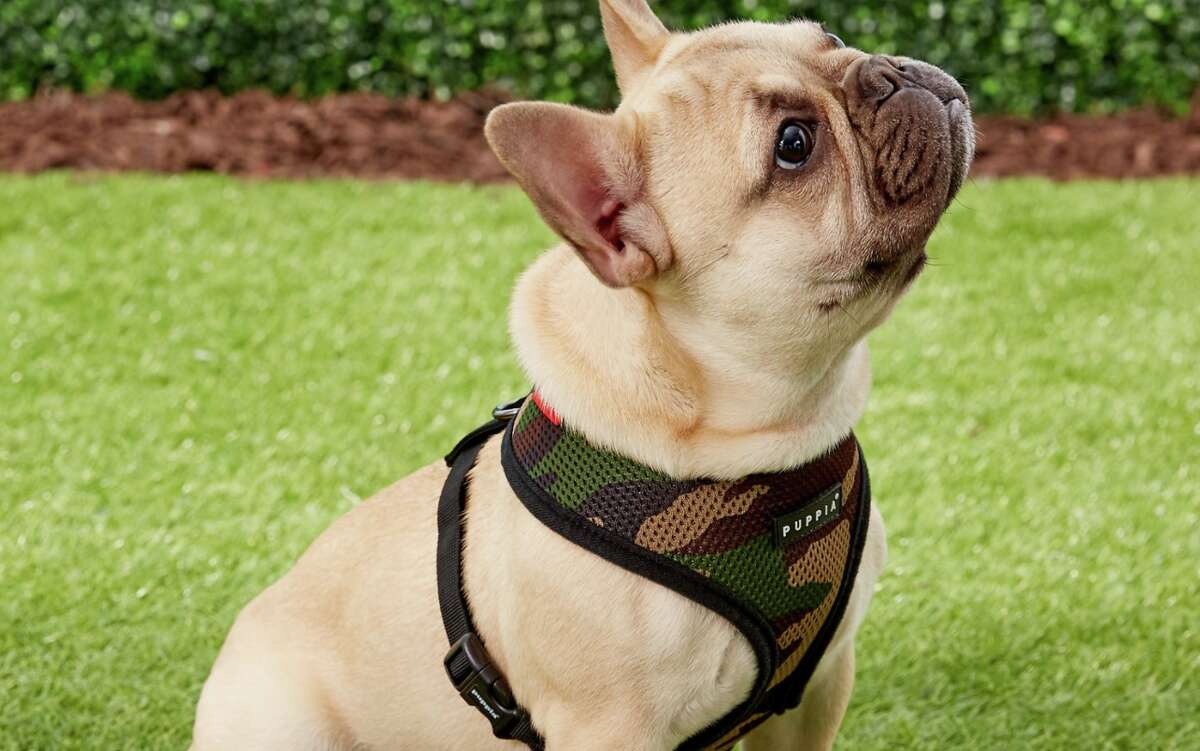 A soft optionPuppia Soft Black Trim Dog Harness, Starting at $13.84If your dog gets uncomfortable wearing more than just a collar, try this Puppia Soft Black Trim Dog Harness. The soft mesh material makes the harness breathable and comfortable for long walks, and the padded design of this harness won't irritate your pet's fur or skin.