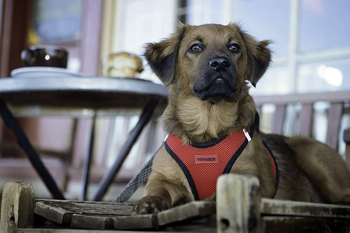 A step-in harnessVoyager Step-In Pet Harness, Starting at $12.99For dogs too squirmy for harnesses with a bunch of clips, this Voyager Step-In Pet Harness is a good fit. Your dog can step right in and you can slip the back of the harness together, then clip their leash onto the hook.