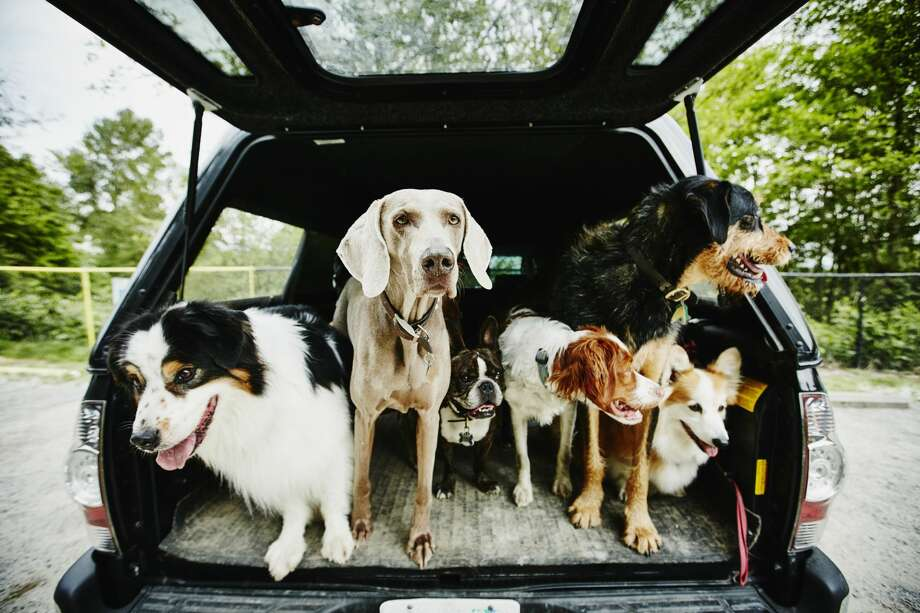 """A real """"paw-pularity"""" contest: we parsed some licensing data from the Seattle Animal Shelter to find the 25 most-registered breeds.Click through the gallery to see if your pooch is one of the most popular breeds in Seattle. Photo: Thomas Barwick/Getty Images / Thomas M. Barwick INC"""