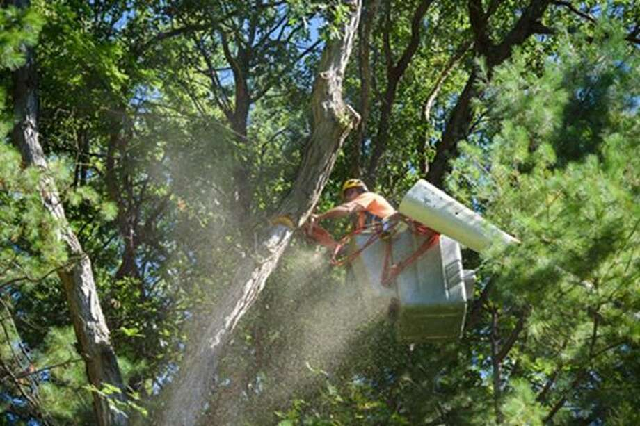 A tree is trimmed. Photo: File