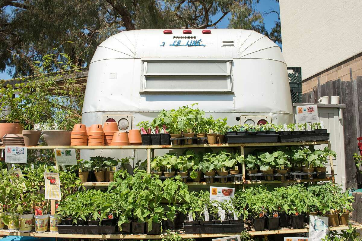 """""""It's survivalist, first and foremost,"""" explained Melissa Smith, who recently started a garden in her Oakland home with her family. """"People have gone generations without knowing where food comes from and how to cook for themselves."""" There's even a bit of a history behind this urge to start a garden. During World War I and World War II, various countries, including the United States, were encouraged to plant victory gardens: vegetable, fruit, and herb gardens planted at private residences and public parks to supplement rations and boost morale. During the pandemic, we're not rationing our food, but it's easy to see the parallel: Grocery stores trips can be risky and stressful, and it's sometimes hard to find everything you need. Amid the uncertainty, people are looking to become a little more self-sufficient. RELATED: How to stop wasting all that fresh produce you've been buying"""