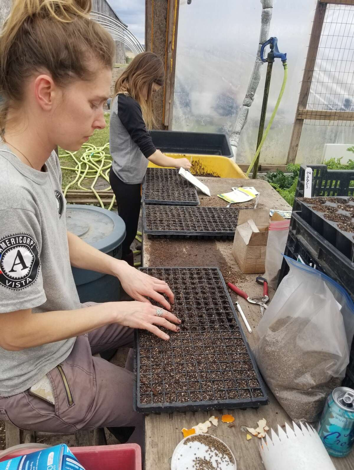 Katie Lietz (front) and daughter Laila (center back) plant seeds in trays at Little Red Organics in Free Soil.