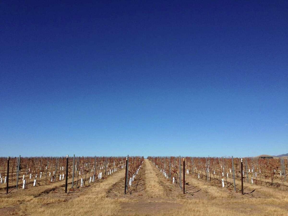 The vineyards behind the Kief-Joshua Vineyard in Sonoita, Arizona, which has a thriving wine community.