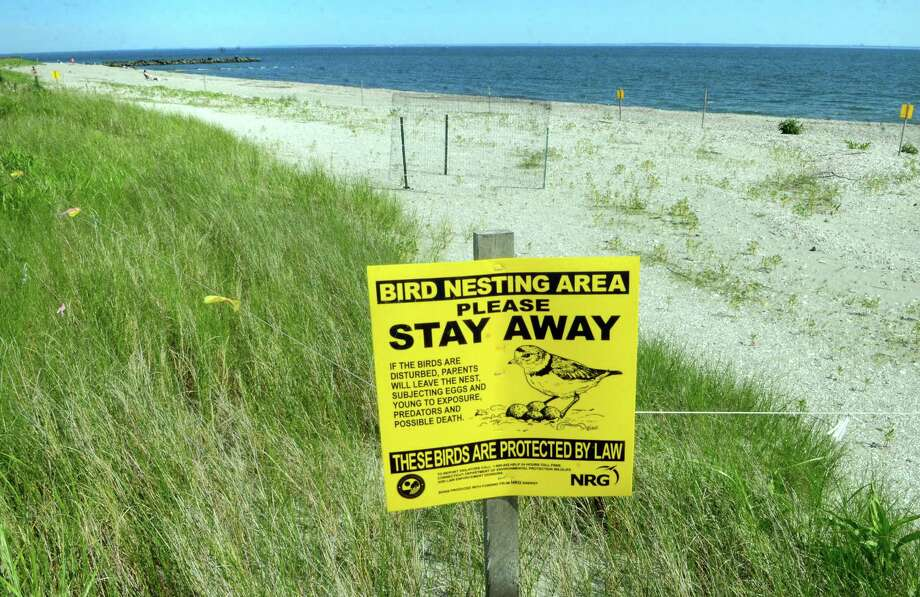 Signs like this one — taken at Long Beach in Stratford, Conn., on Friday, June 28, 2019 — help remind visitors to keep away from nests for the piping plover population. Photo: Christian Abraham / Hearst Connecticut Media / Connecticut Post