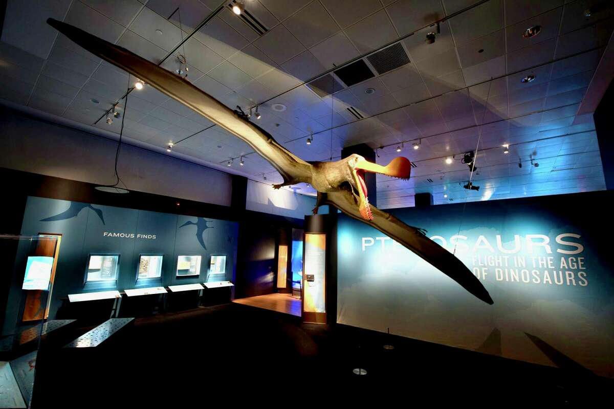 A model of a Tropeognathus mesembrinus, with a wingspan of more than 25 feet, soars overhead at the entrance to the
