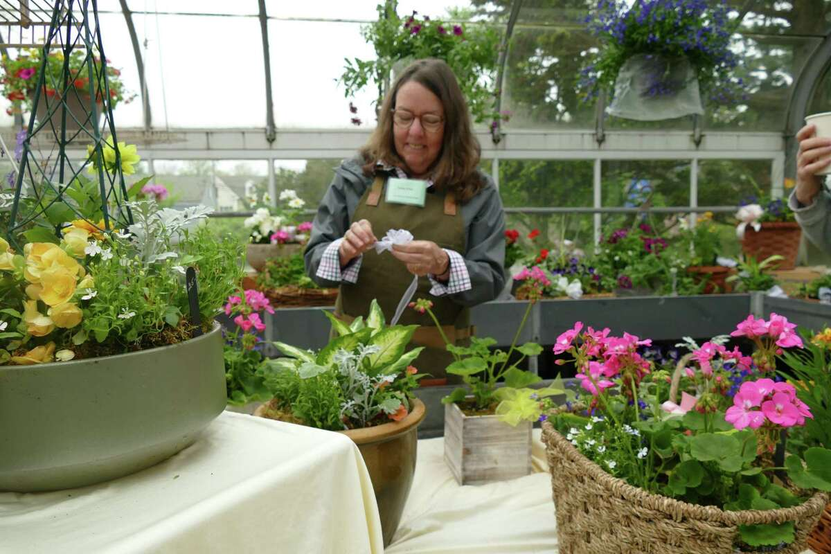 Cathy Prior of the Caudatowa Garden Club arranges plants inside the Ballard Greenhouse in Ridgefield at last year's plant sale.