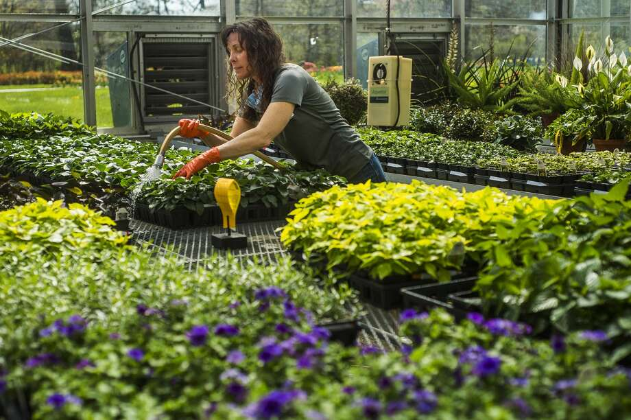 Dow Gardens staff work on landscaping, pruning, fertilizing, seeding, and more Thursday, May 7, 2020 after the statewide restriction on landscaping work was lifted April 24. (Katy Kildee/kkildee@mdn.net) Photo: (Katy Kildee/kkildee@mdn.net)