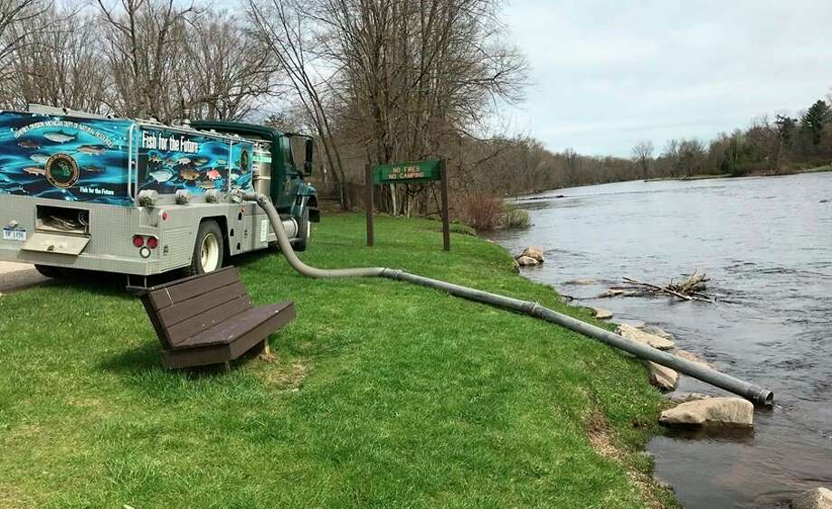 While thousands of trout were stocked into the Muskegon River this week, people still can view trout being housed at the Paris Park Fish Hatchery this summer. (Courtesy photo)