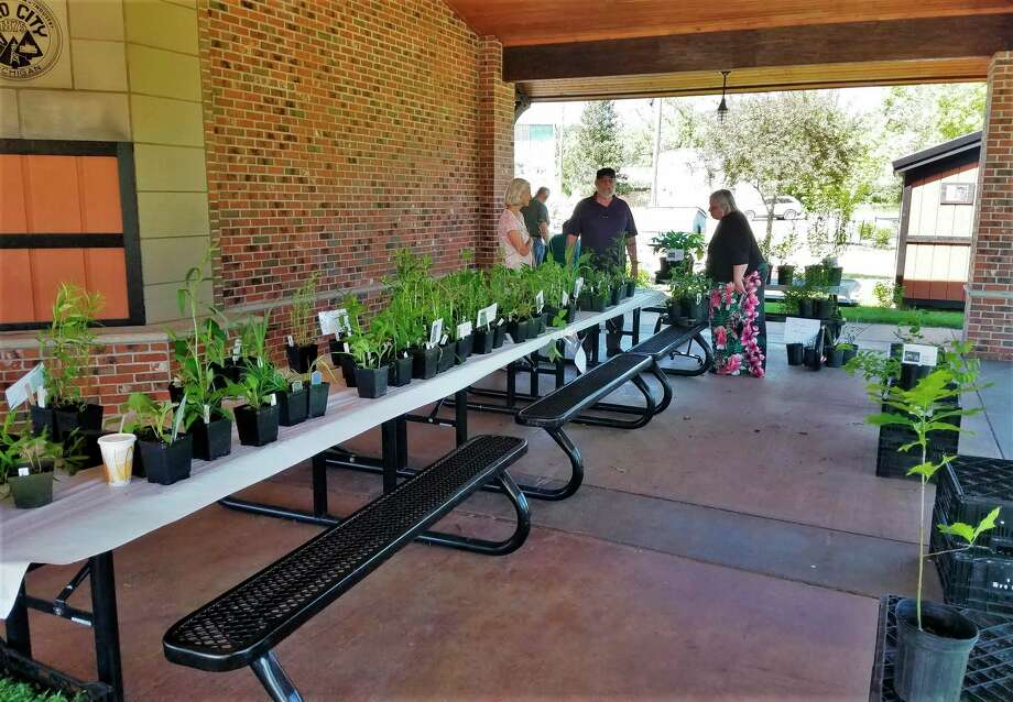 Partnering with the Osceola-Lake Conservation District, the Mecosta Conservation District will be hosting its Annual Native Plant sale in June. Residents will have the opportunity to purchase several native plants including various species of grasses and wildflowers. (Courtesy photo)