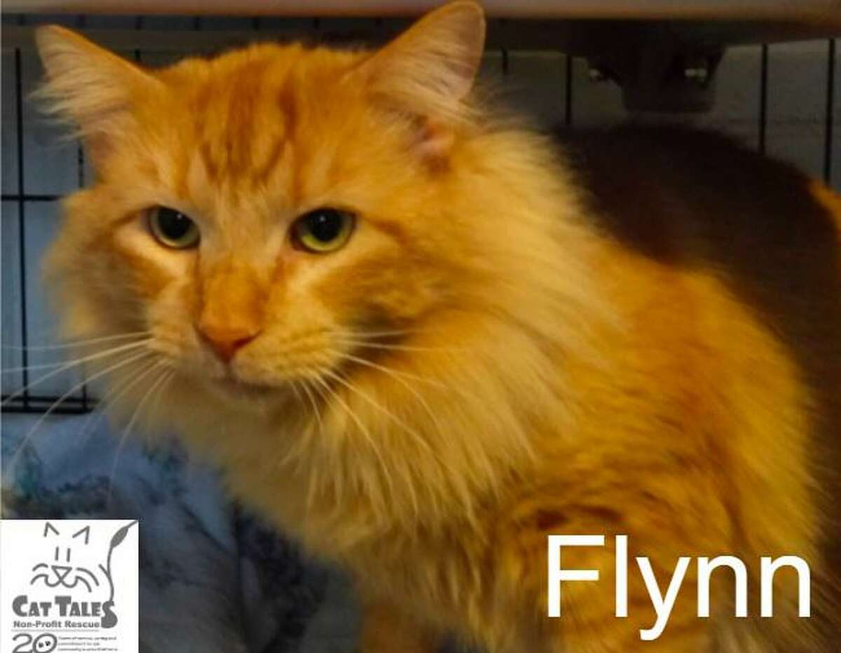 Flynn is an orange male, about a year old. He says,