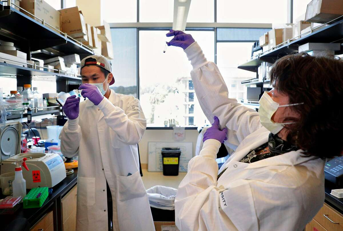 Graduate student Marcus Wong and Dr. Eva Harris, right, look over a test sample that was sent out to determine test kit usability for a random East Bay Covid-19 antibody test in Harris's lab at UC Berkeley in Berkeley, Calif., on Tuesday, May 5, 2020. Harris is an infectious disease specialist and vaccinologist at UC Berkeley and along with Dr. Lisa Barcellos, a public health specialist, they are leading one of the largest coronavirus sero-surveys in the area.
