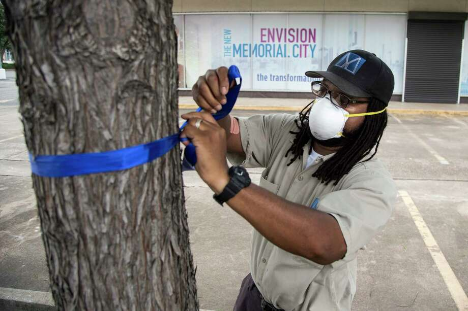 Allan Anderson ties a blue ribbon around one of the trees that surround Memorial City Mall on Friday, May 8, 2020 in Houston. Memorial City will Shine Blue, with blue ribbons and the buildings, bridges and garages lit in blue, in recognition of National Nurses Week and National Hospital Week and to honor those healthcare heroes fighting on the frontline against COVID-19. Photo: Brett Coomer, Staff Photographer / © 2020 Houston Chronicle