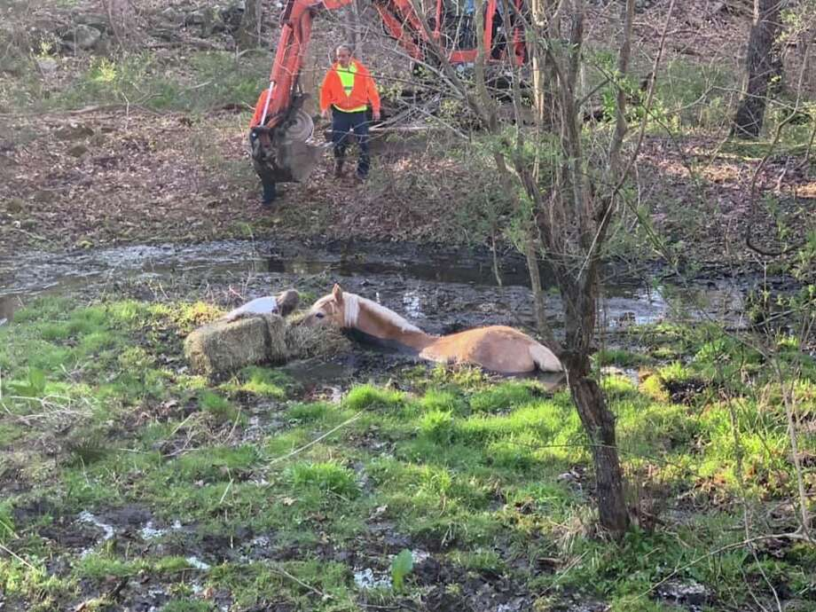 Firefighters freed a horse stuck in mud in Bethlehem, Conn., on Thursday, May 7, 2020. Photo: Contributed Photo / Bethlehem Firefighters Association