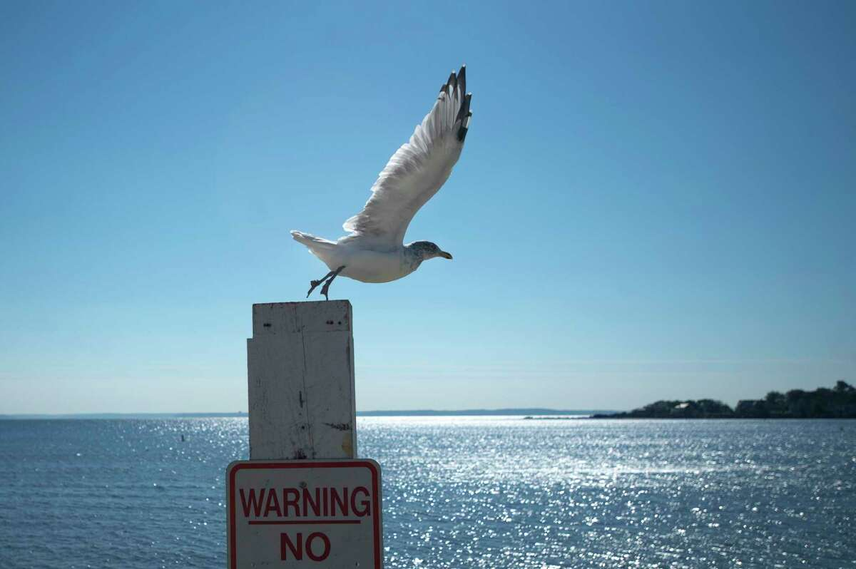 A seagull flies off a sign post at Cummings Beach in Stamford.
