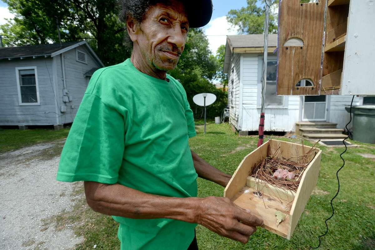 Howard Orphey shows the hatchlings in one of the large 16-room Martin birdhouses which he has built and maintains at his home on Pipkin Street in South Park. Photo taken Monday, May 4, 2020 Kim Brent/The Enterprise