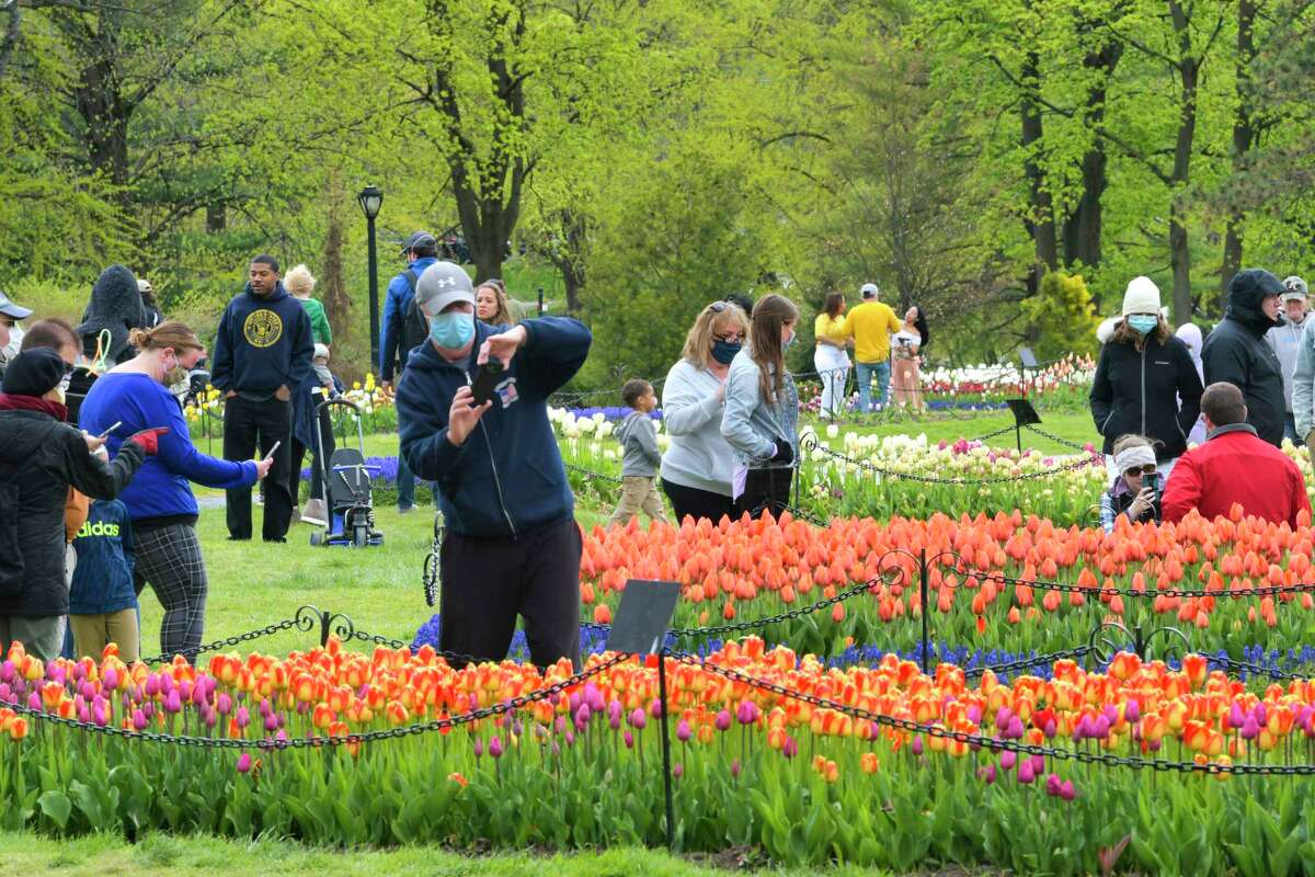 Families make their way around Washington Park to view the tulip beds on Sunday, May 10, 2020, in Albany, N.Y. This past weekend would have been the Albany Tulip Festival at the park but the event was canceled due to the pandemic. (Paul Buckowski/Times Union)