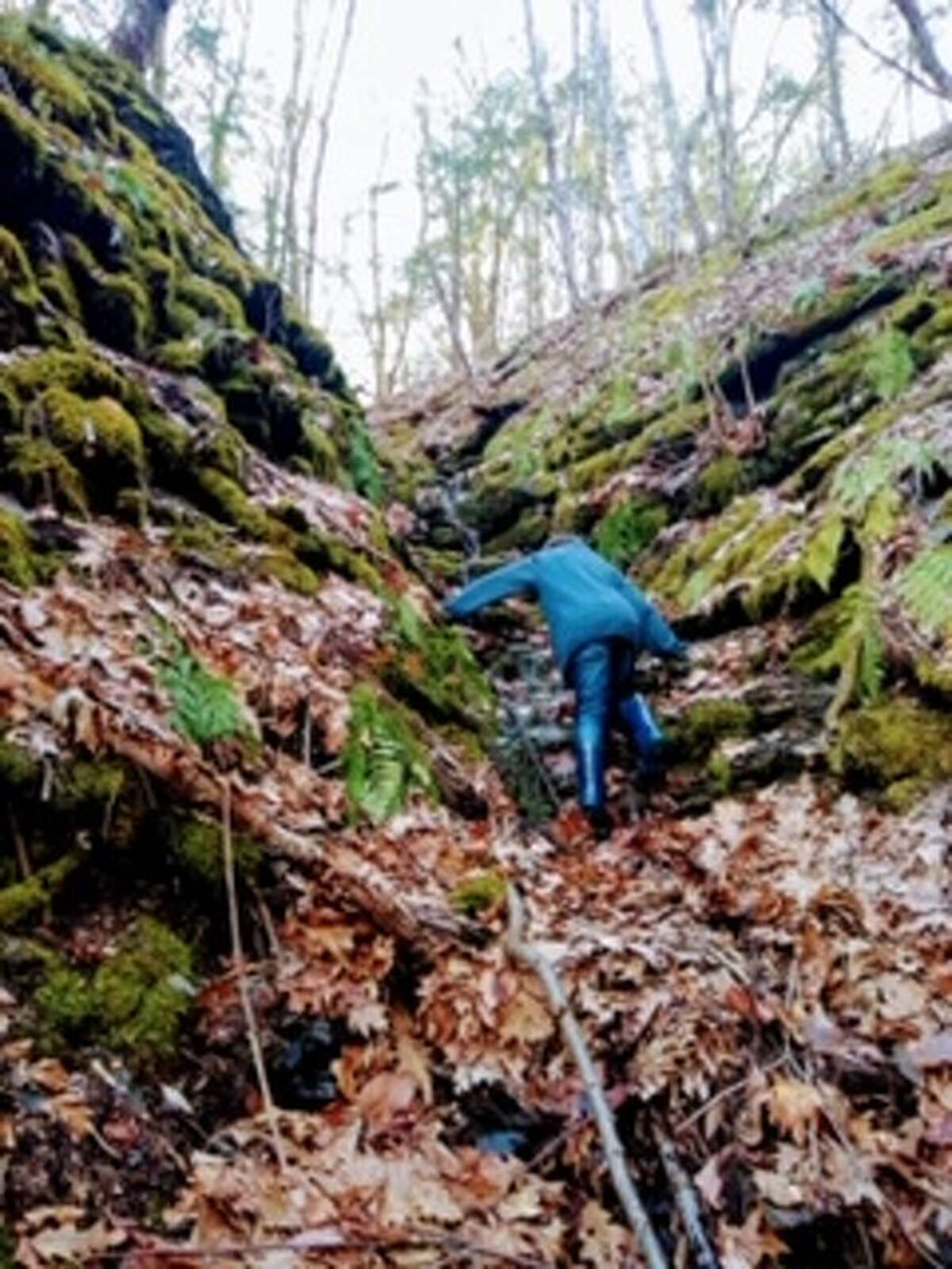 Quarantine adventures with Nicky Yetto and Lukey, pictured climbing during a hike.
