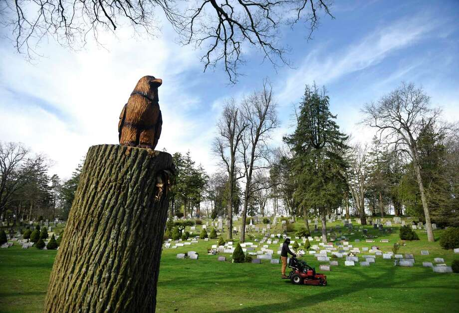 An eagle is carved on a tree at Putnam Cemetery in Greenwich, Conn. Tuesday, April 14, 2020. Instead of completely cutting down the ash tree, it was trimmed to 10 feet and an artist was commissioned to carve an eagle atop the trimmed tree. Photo: Tyler Sizemore / Hearst Connecticut Media / Greenwich Time