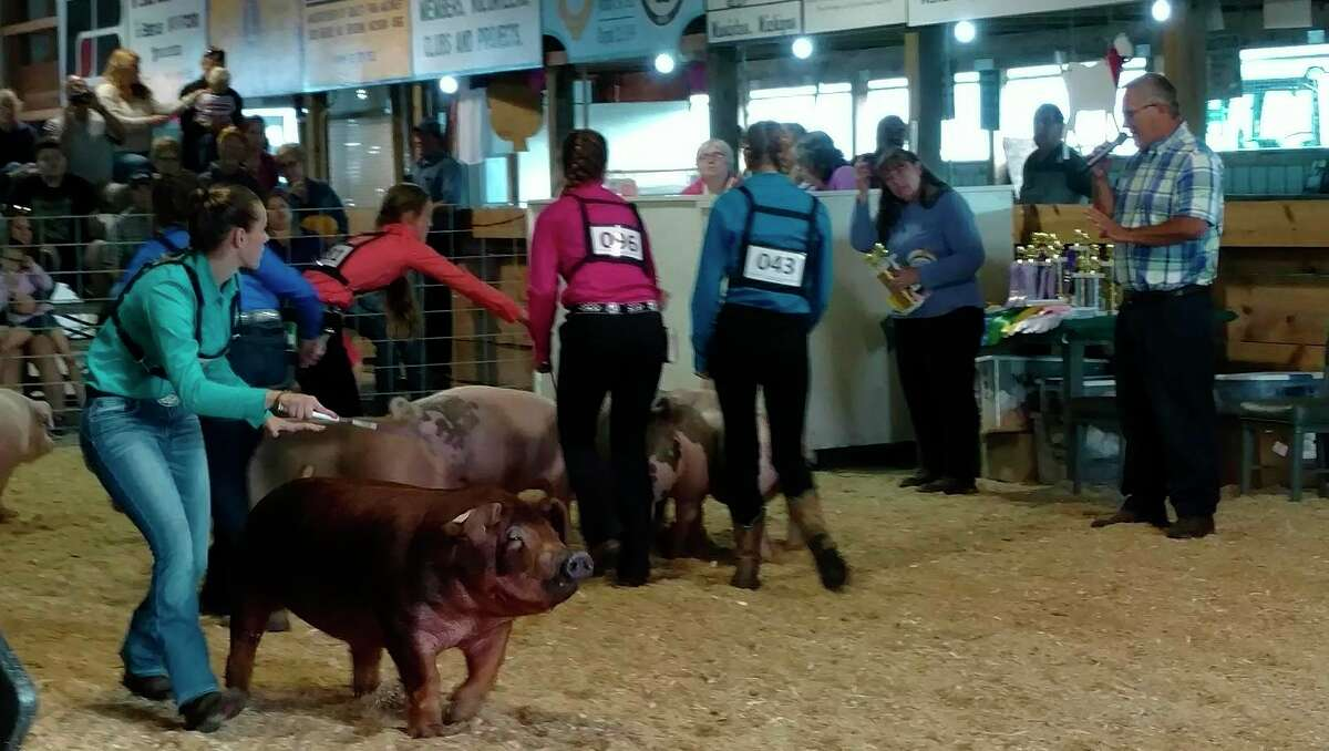 The 4-H will not be participating in the Manistee County Fair this August, but the fair will offer ayouth open show that follows the 4-H's rules as closely as possible. (File photo)