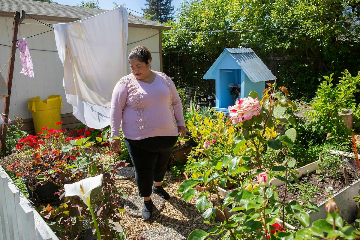 Socorro Diaz at a garden she shares with her neighbors on Friday, April 24, 2020, in Santa Rosa, Calif. Diaz, an undocumented immigrant housekeeper, is unemployed due to the coronavirus pandemic. She said the $500 check she may receive from the state as part of a new $125 million fund for undocumented immigrants will not cover her monthly rent of $1,500.