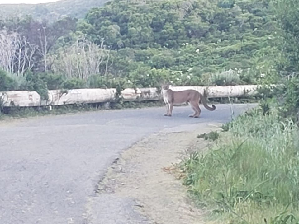 Hiker encounters 2 mountain lions on popular trail