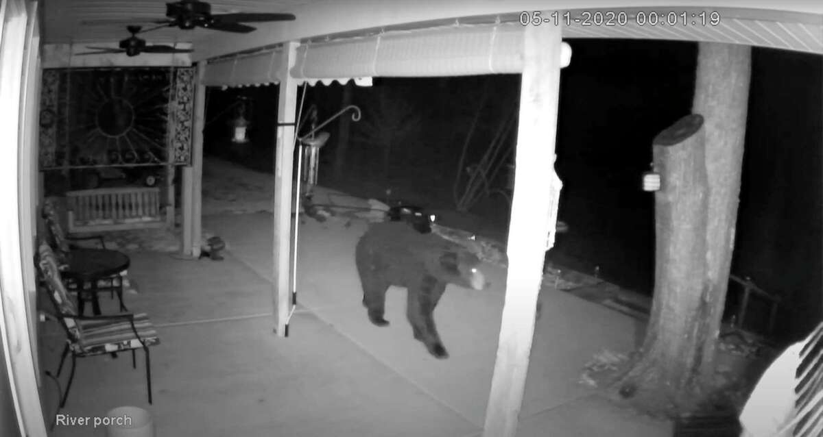 Gary Scramling's security cameras caught this black bear on tape as it roamed through his porch this week. During its visit, the bear destroyed some of Scramling's feeders before leaving.