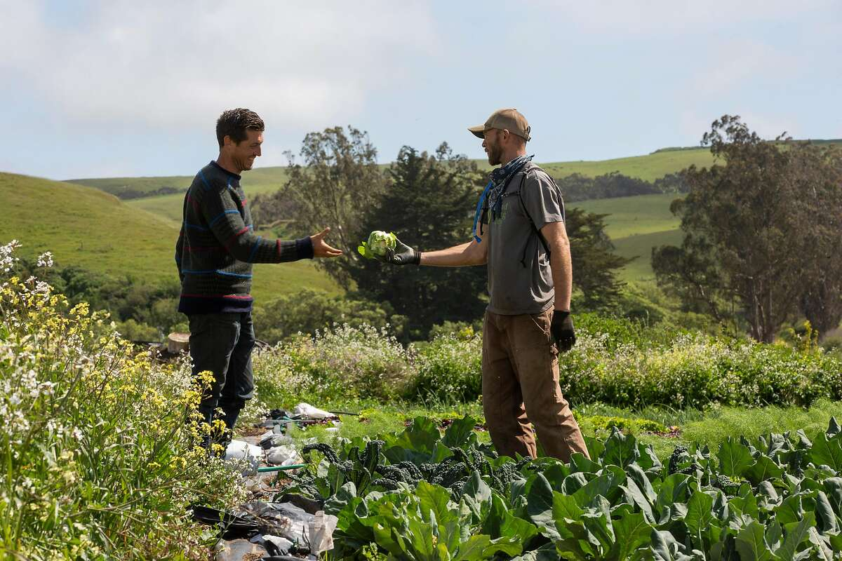 From left: Guido Frosini receives cabbage from Donald Pivec at True Grass Farms on Tuesday, May 12, 2020, in Tomales, Calif. Pivec lives and farms on Frosini�s land. They exchange goods and services. Pivec also keeps his chickens on the farm and moves their homes every few weeks to fertilize Frosini�s land.