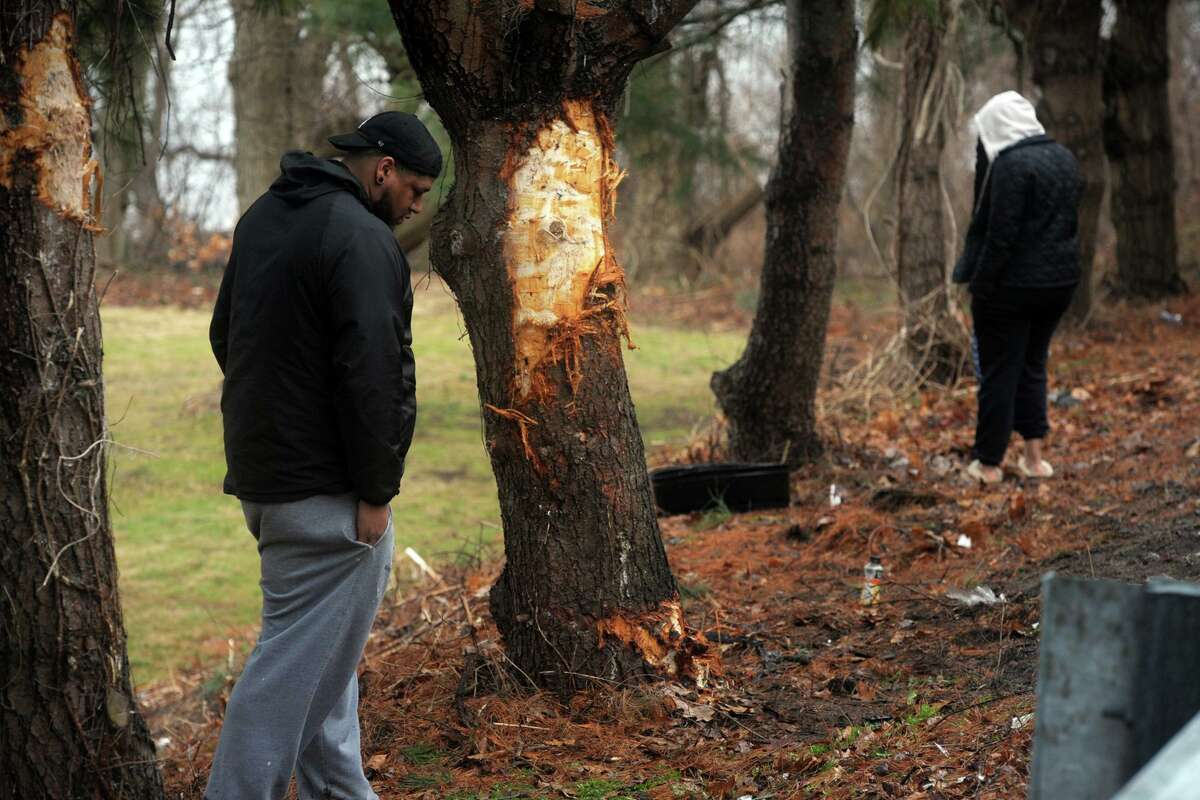 People search the roadside next to trees that were impacted by one of the two vehicles involved in a fatal accident that occurred on River Rd. in Shelton, Conn. shortly before midnight Sunday, seen here on Feb. 10, 2020. Police confirmed Monday morning that two people were killed in the accident.
