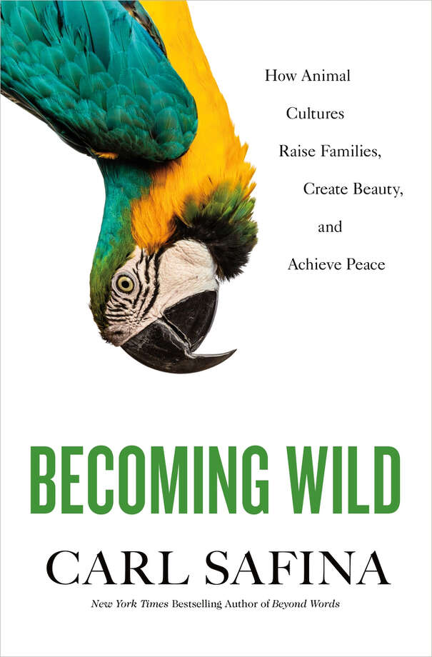 Becoming Wild Photo: Henry Holt, Handout / handout