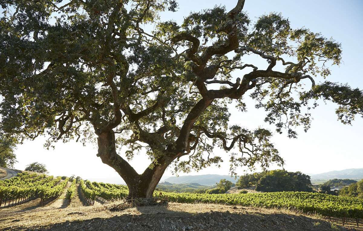 Scenes from the nature hikes available at Jordan Winery in Healdsburg
