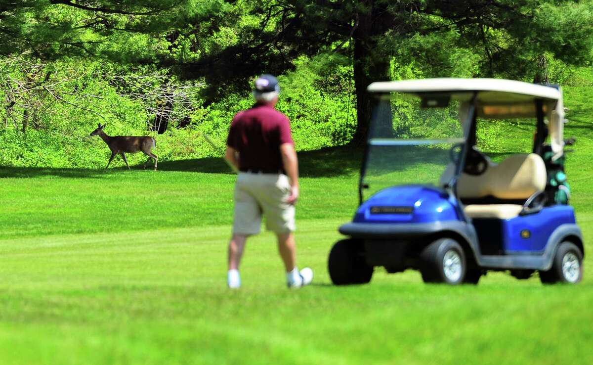 A golfer walks to his cart as a deer passes through at Fairchild Wheeler Golf Course in Bridgeport, Conn., on Saturday May 16, 2020.