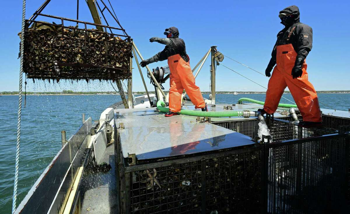 Workers with Copps Island Oysters keep the business running Wednesday, May 13, 2020,in Norwalk, Conn. When restaurants across the country shut down their dining rooms in March, oyster farmers were left with nowhere to sell their oysters, and some worry about whether the restaurant industry won't rebound, hurting their aquaculture businesses in the long-term.