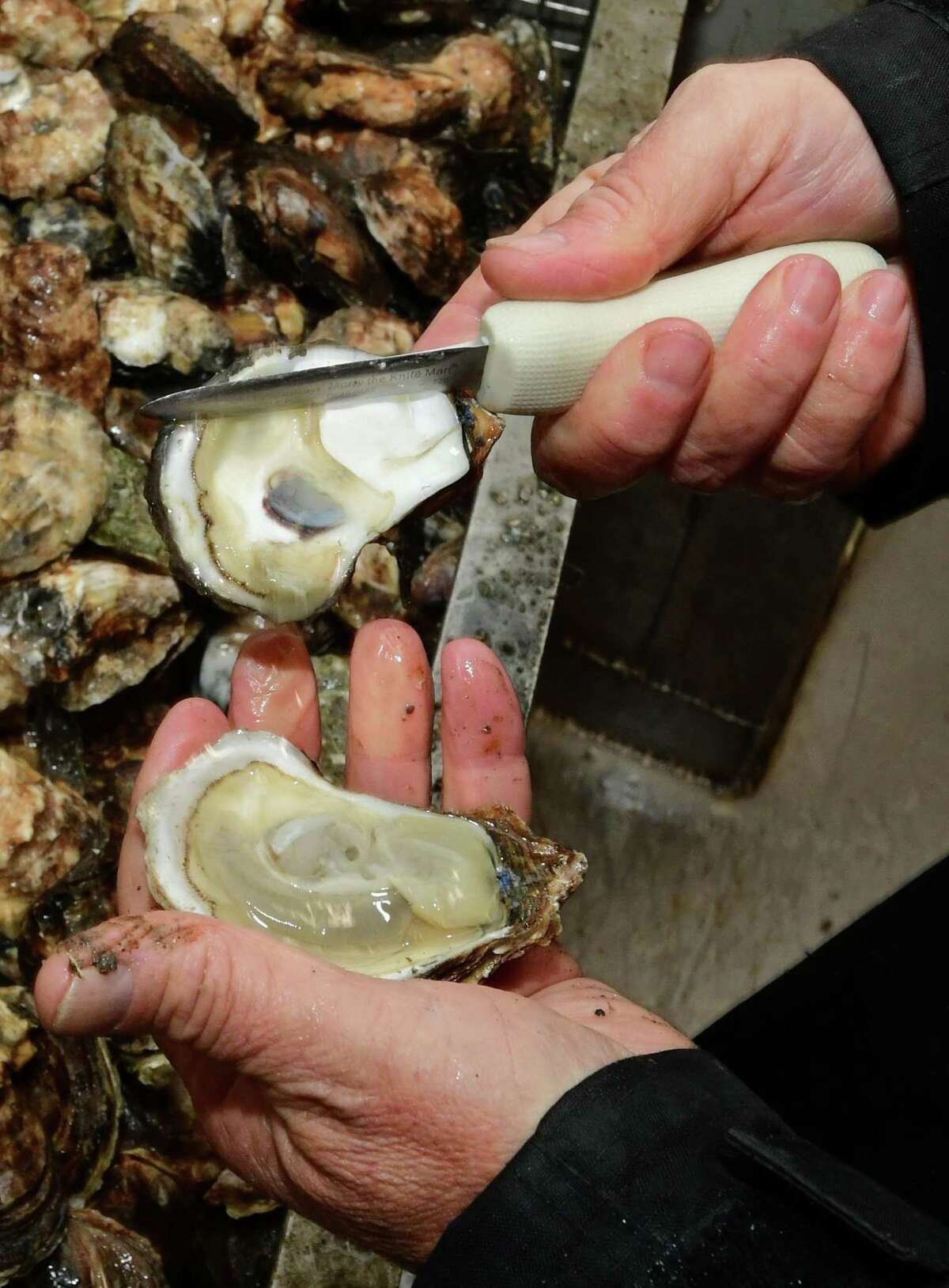 Copps Island Oysters - Norwalk Website
