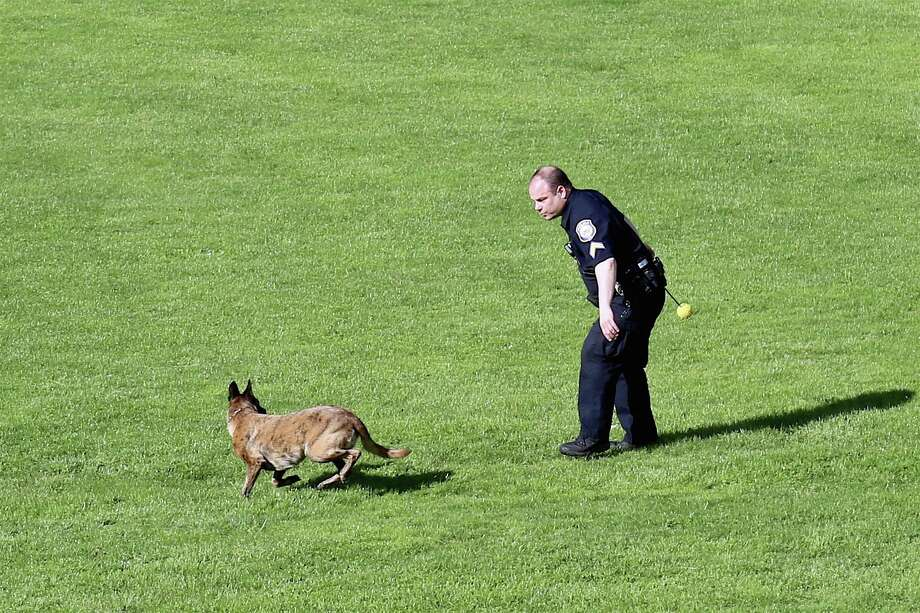 Corporal Kevin Smith of the Westport Police Department gives his dog Onyx, a recruit in training, some serious aerobic work at Greens Farms Elementary School on Saturday, May 16, 2020, in Westport, Conn. Photo: Jarret Liotta / Jarret Liotta / ©Jarret Liotta 2020