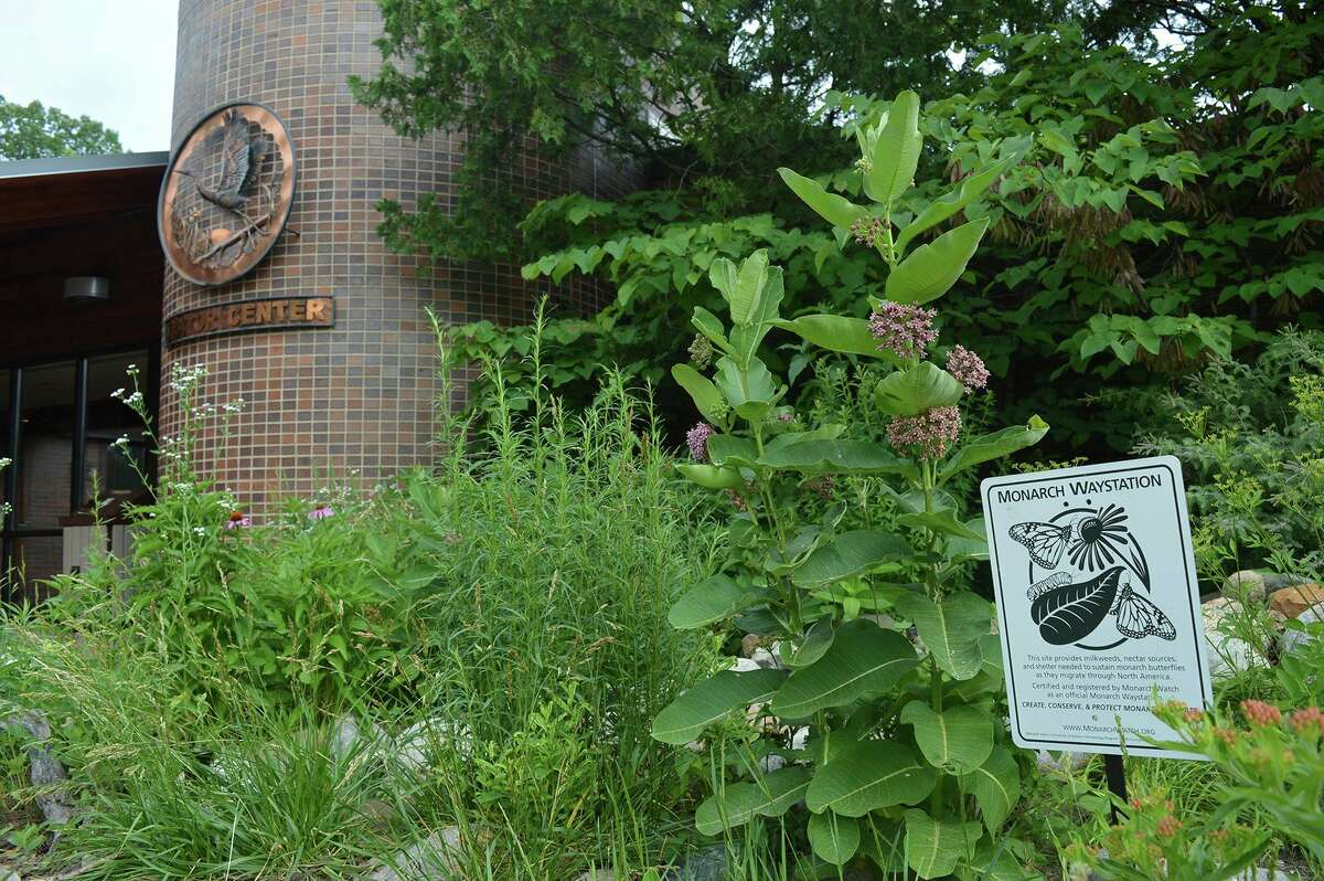 Chippewa Nature Centerreceived a $400 grant from Keep Michigan Beautiful, Inc., whichwill be used to purchase and plant additional native pollinator wildflowers to expand and reestablish the diversity of plants in the Butterfly Garden and Rain Garden. (Photo provided)